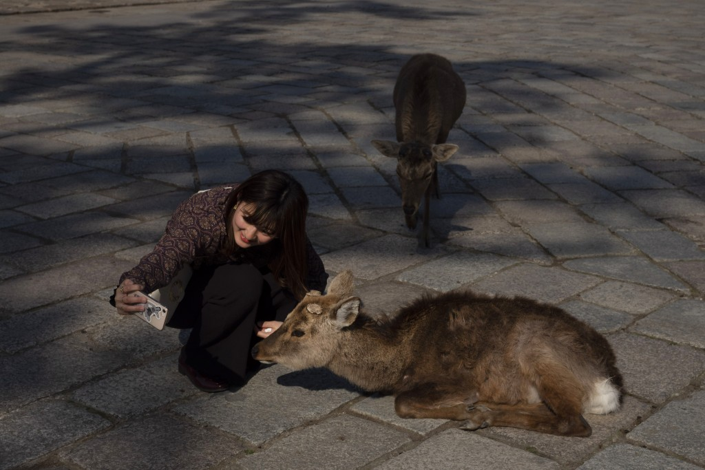 A tourist takes a selfie with a deer outside Todaiji temple in Nara, Japan, Tuesday, March 17, 2020. (AP Photo/Jae C. Hong)