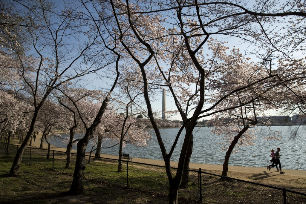 With the Washington Monument in the background, people run by cherry blossoms at the Tidal Basin, March 18, 2020, in Washington. (AP Photo/Andrew Harn...