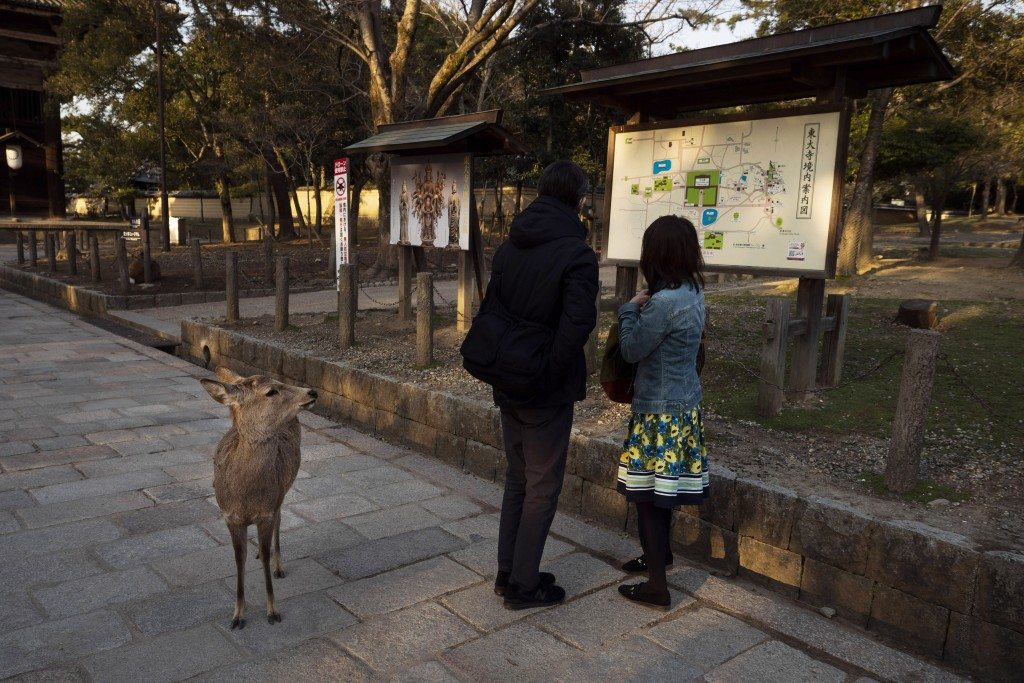 A deer looks at two visitors standing in front of an area map outside Todaiji temple in Nara, Japan, Tuesday, March 17, 2020. (AP Photo/Jae C. Hong)