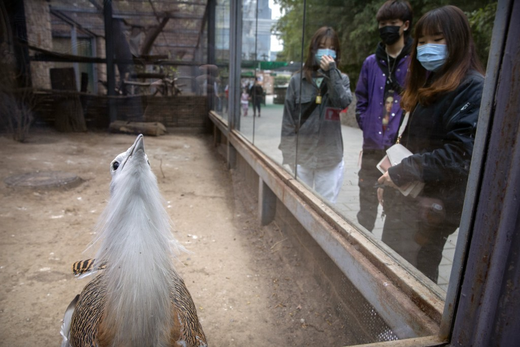 Visitors wearing face masks look at a great bustard at the Beijing Zoo after it reopened its outdoor exhibit areas to the public for the first time af...