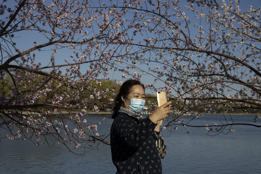In this photo taken Thursday, March 19, 2020, a woman wearing a face mask poses with a blooming cherry blossom for a selfie at a park in Beijing, Chin...