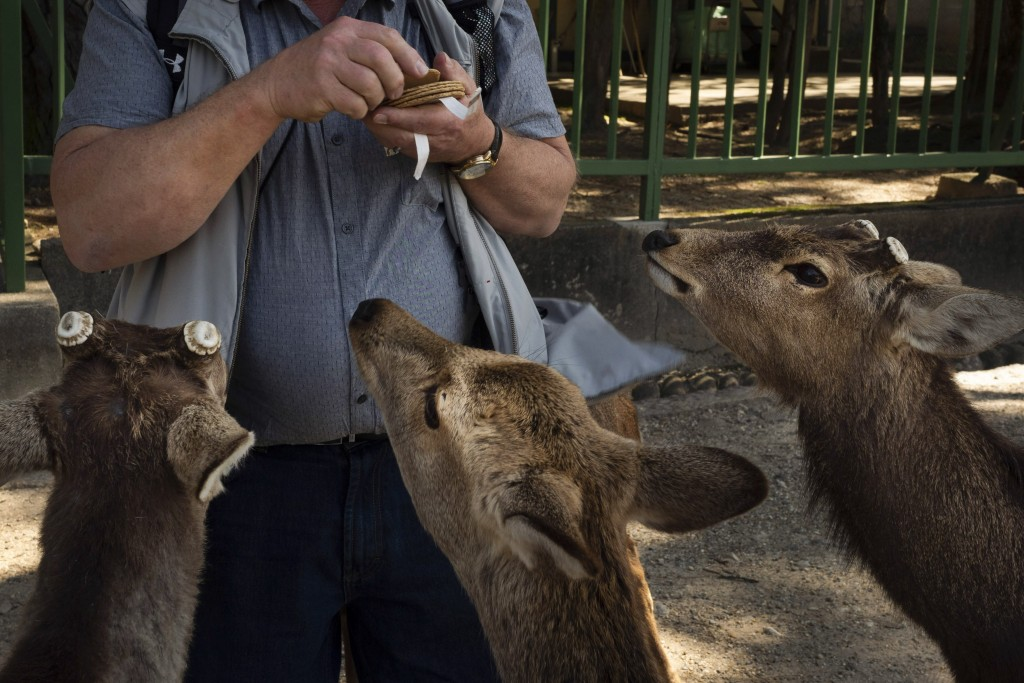 A tourists feeds crackers, treats mostly with wheat flour and rice bran, in Nara, Japan, Thursday, March 19, 2020. More than 1000 deer roam free in th...