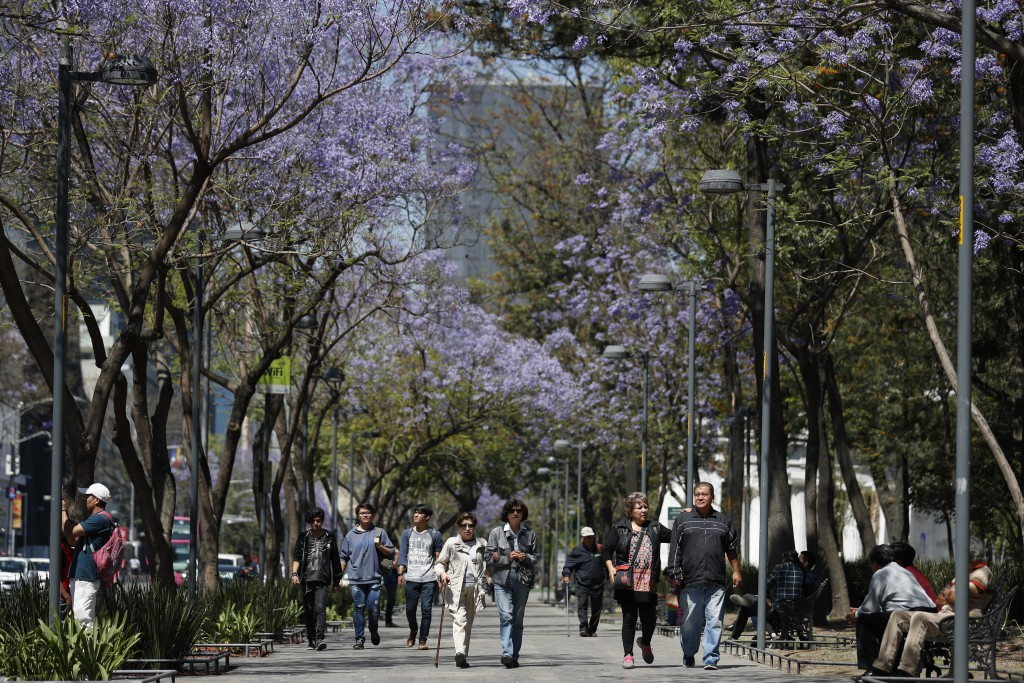 People stroll under blossoming jacaranda trees in the Alameda park in Mexico City, Monday, March 23, 2020. Beginning Monday, Mexico's capital shut dow...