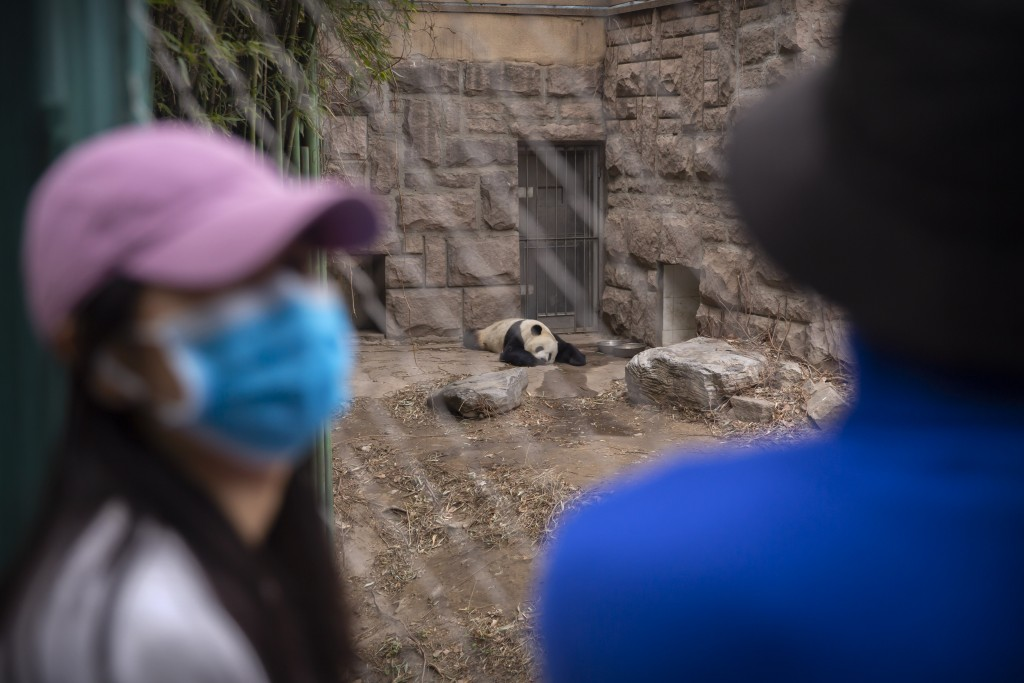 A giant panda slumps in an enclosure as visitors wearing face masks look on at the Beijing Zoo after it reopened its outdoor exhibit areas to the publ...
