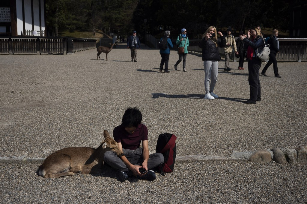 A deer cuddles with a tourist at Kofukuji temple in Nara, Japan, Tuesday, March 17, 2020. (AP Photo/Jae C. Hong)