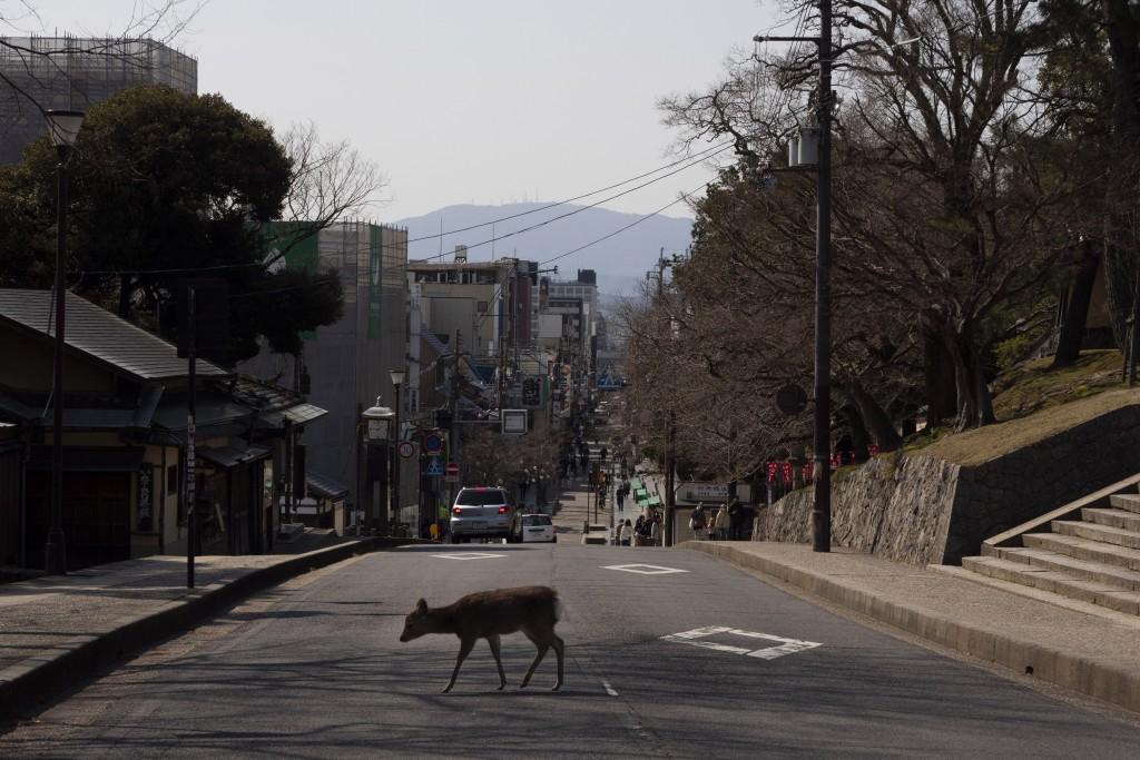 A deer crosses the street in Nara, Japan, Tuesday, March 17, 2020. (AP Photo/Jae C. Hong)