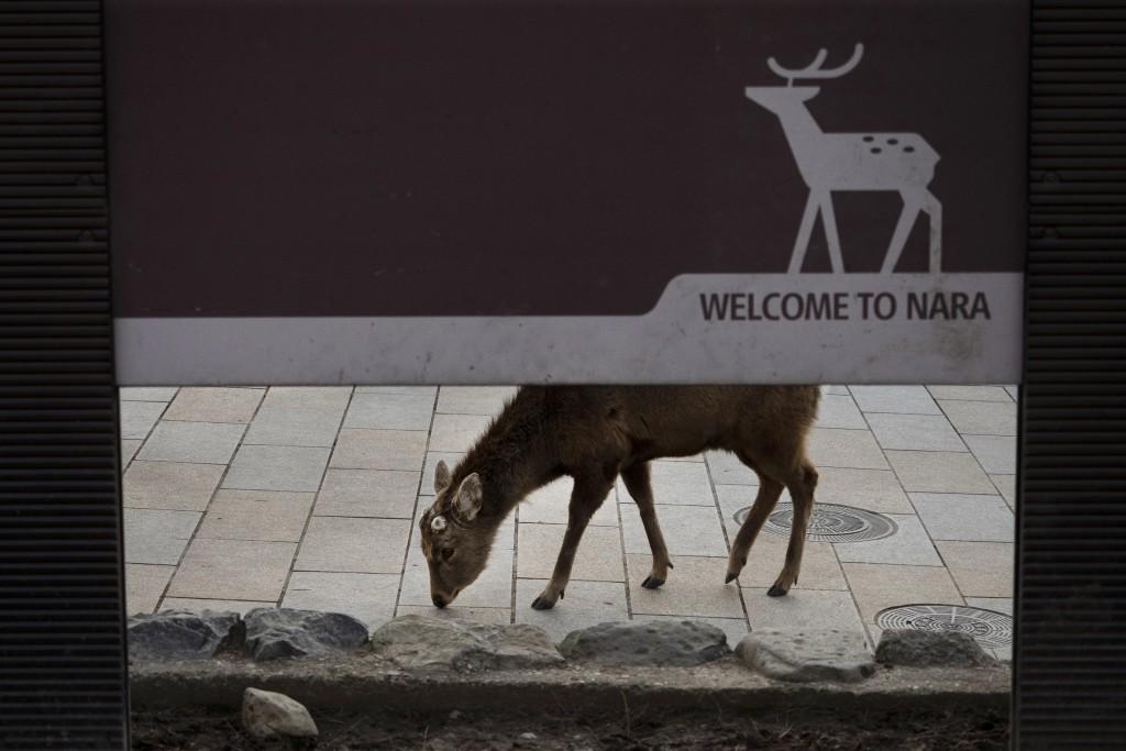 A deer wanders around the shopping area in Nara, Japan, Tuesday, March 17, 2020. (AP Photo/Jae C. Hong)