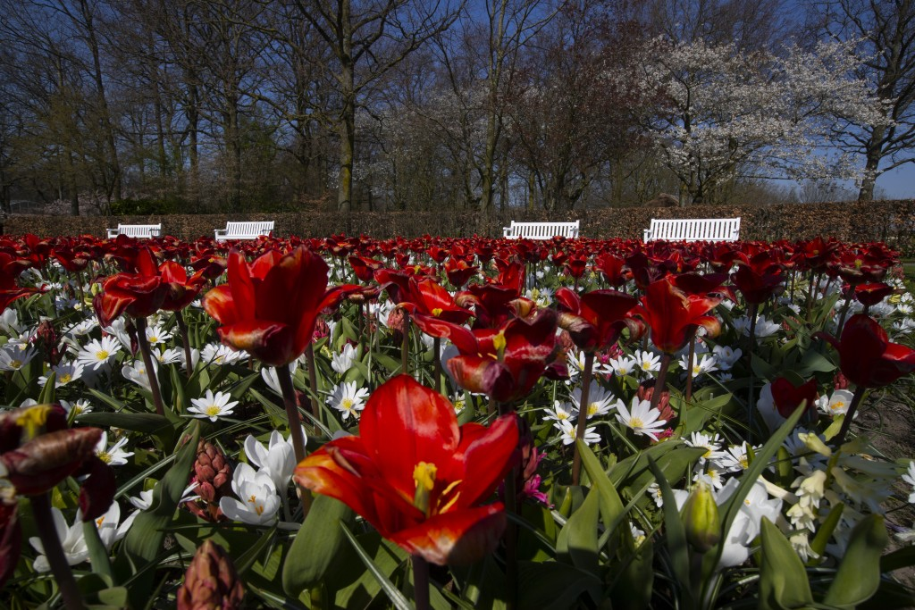 Lanes and benches void of visitors are seen at the world-renowned, Dutch flower garden Keukenhof which was closed because of the coronavirus, in Lisse...