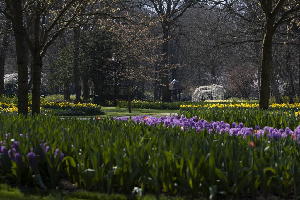 Lanes void of visitors are seen at the world-renowned, Dutch flower garden Keukenhof which was closed because of the coronavirus, in Lisse, Netherland...