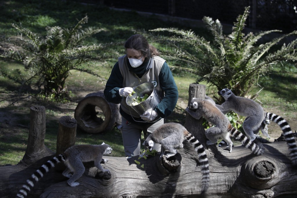 Zookeeper Benedetta Pellegrini wears a face mask as she feeds lemurs at the closed zoological garden in Rome on Wednesday, March 25, 2020. The zoo has...