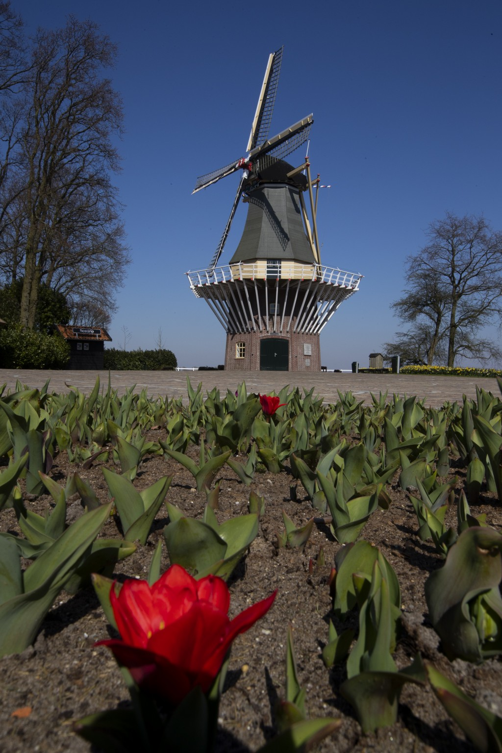 View of the empty, world-renowned, Dutch flower garden Keukenhof which was closed because of the coronavirus, in Lisse, Netherlands, Thursday, March 2...