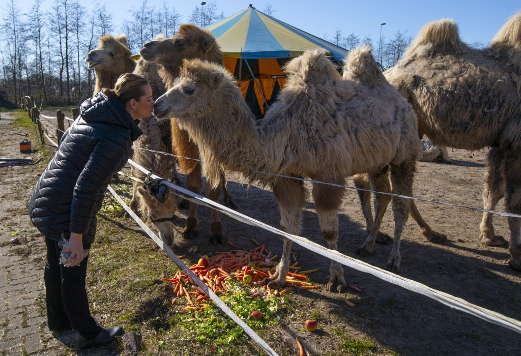Sarina Renz kisses one of the eight Siberian Steppe camels, of the stranded Renz Circus in Drachten, northern Netherlands, Tuesday, March 31, 2020. Th...