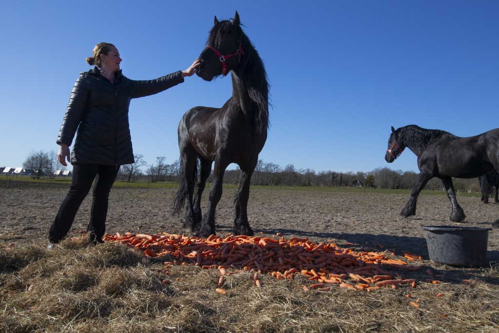 Sarina Renz strokes a Friesian stallion, one of the many animals of the stranded Renz Circus, as they feats on carrots donated by local farmers in Dra...