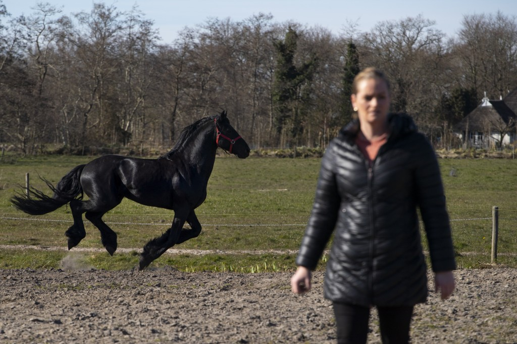 A Friesian stallion runs past Sarina Renz during feeding time for the stranded animals of the Renz Circus in Drachten, northern Netherlands, Tuesday, ...