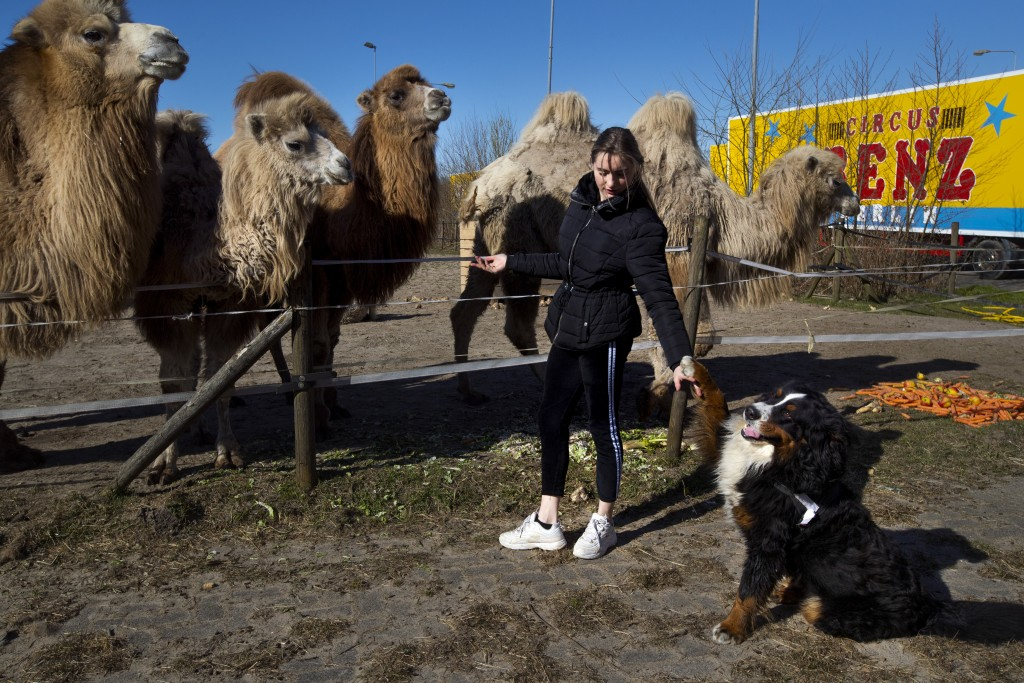 Madeleine Renz, an eighteen-year-old circus artist, feeds donated carrots to the eight Siberian Steppe camels, stranded in Drachten, northern Netherla...