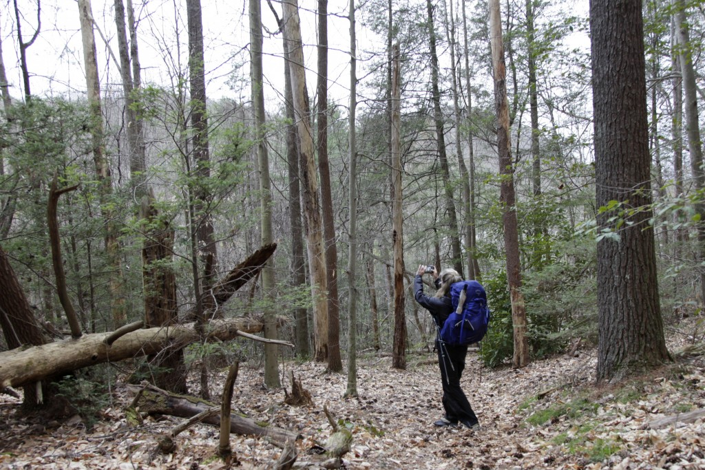 In this March 31, 2020, photo,  Kimberly Selvage stops to take a photo along a portion of the Appalachian Trail near Damascus, Va.  The solo hiker hop...
