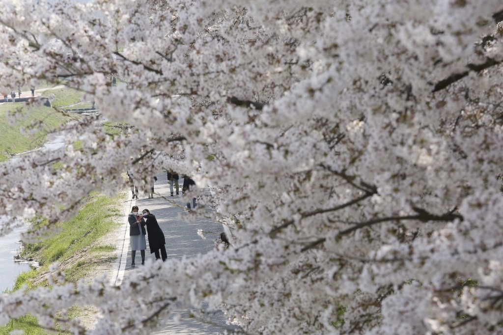 Women wearing face masks take photo near blooming cherry blossom trees at a park amid the outbreak of the new coronavirus in Seoul, South Korea, Monda...