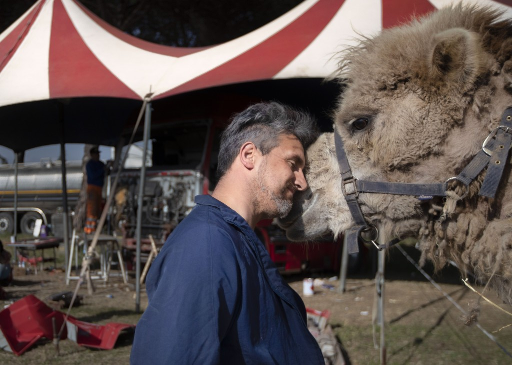 """Rony Vassallo puts his head to his camel at the Rony Roller circus, parked on the outskirts of Rome, Thursday, April 16, 2020. """"It is strange for me t..."""