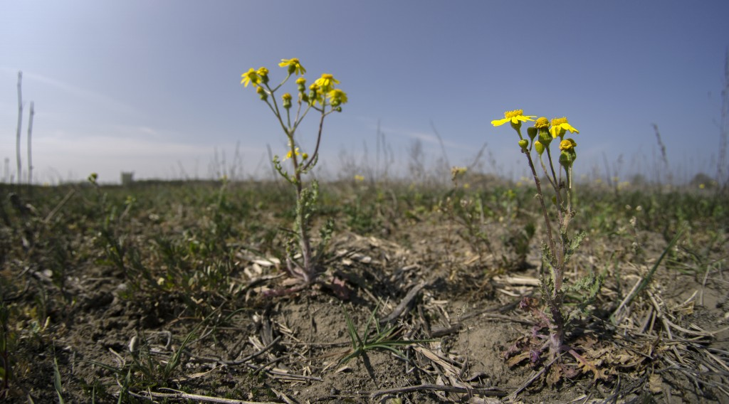 Plants grow on a field in Falkensee, near Berlin, Germany, Tuesday, April 28, 2020. Germany's farmers, foresters, and firefighters are eagerly awaitin...