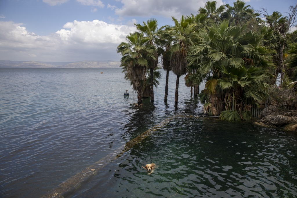 In this Saturday, April 25, 2020 photo, a dog swims in the water as trees stand where dry land was in the Sea of Galilee, locally known as Lake Kinner...