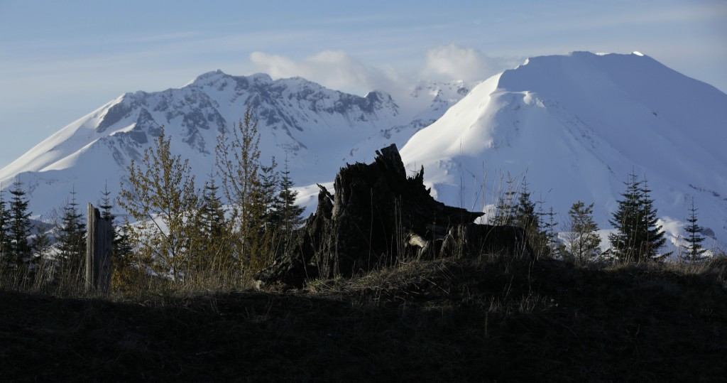 FILE - In this May 7, 2010, file photo, a tree stump sits in front of Mount St. Helens in Washington state. May 18, 2020, is the 40th anniversary of t...