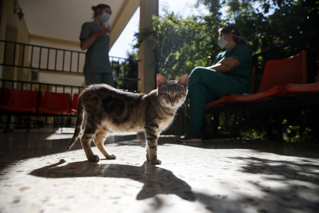 In this photo taken on Friday, May 8, 2020, medical staff chat on a balcony as a cat stands outside doctors' office at the COVID-19 Clinic of Sotiria ...