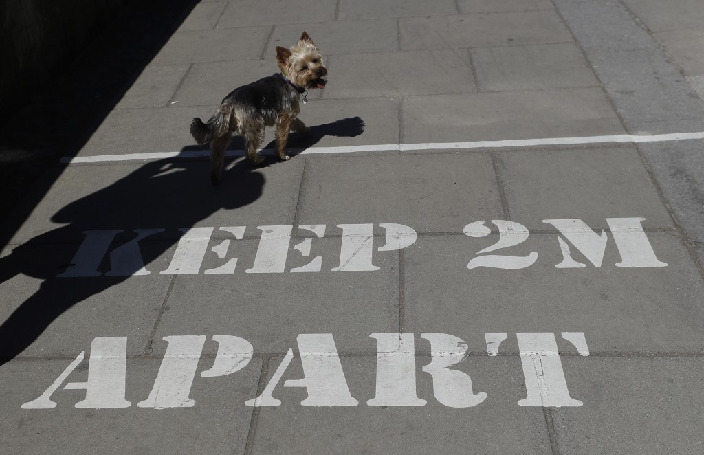 A dog walks over a sign printed on the pavement, in London, Tuesday, May 19, 2020, after the introduction of measures to bring the country out of lock...