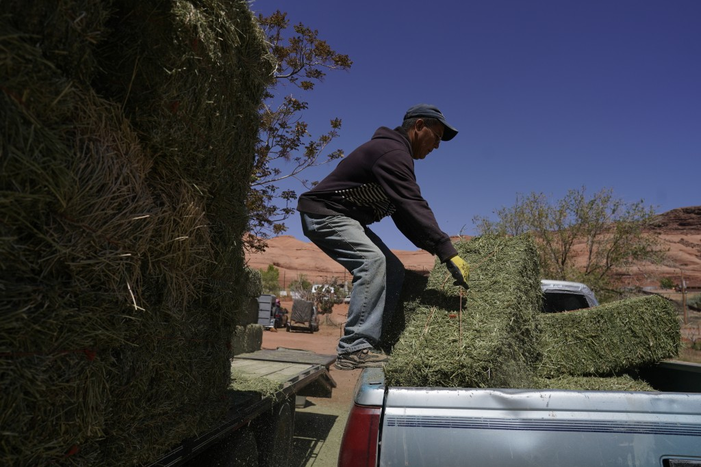 In this April 27, 2020, photo, Charlie Whitehouse loads hay into the back of a pickup truck in Oljato-Monument Valley, Utah, on the Navajo reservation...