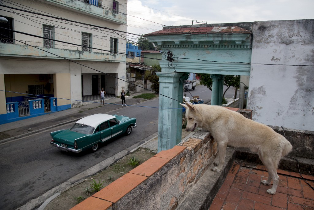 A pet dog watches a few cars go by from the roof of a building in the Cerro neighborhood, during a lockdown to curb the spread of COVID-19, in Havana,...