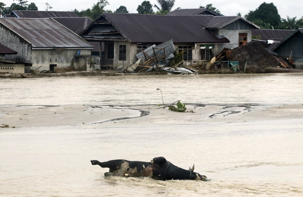 A dead cow lies half submerged in flood water at an area affected by flash flood in Luwu Utara, South Sulawesi province, Indonesia, Thursday, July 16,...