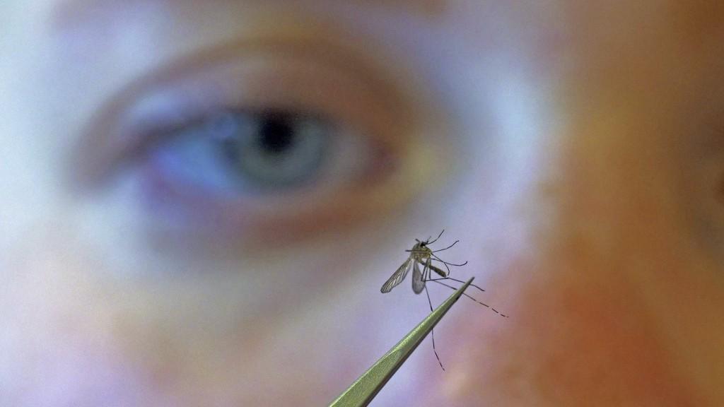 "FILE - In this Aug. 26, 2019 file photo, Salt Lake City Mosquito Abatement District biologist Nadja Reissen examines a mosquito in Salt Lake City. ""Mo..."