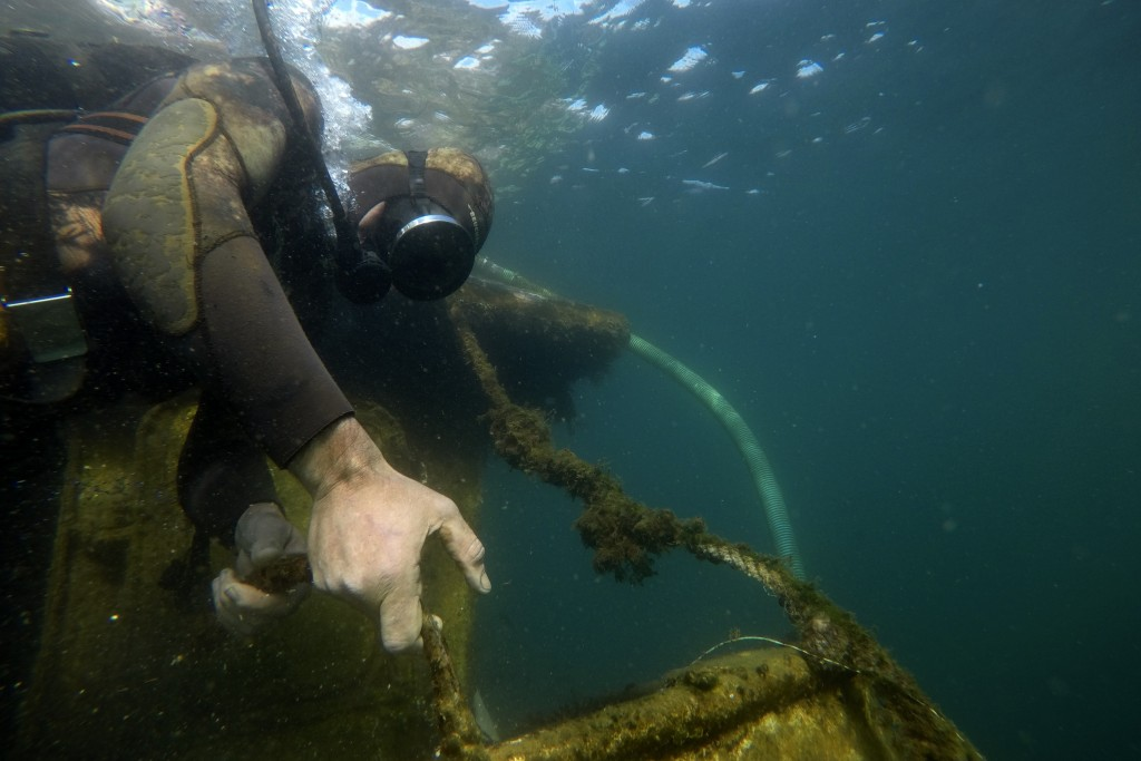 A diver pulls a shipwreck's rope during a raising operation, on Salamina island, west of Athens, on Wednesday, Feb. 13, 2020. Greece this year is comm...