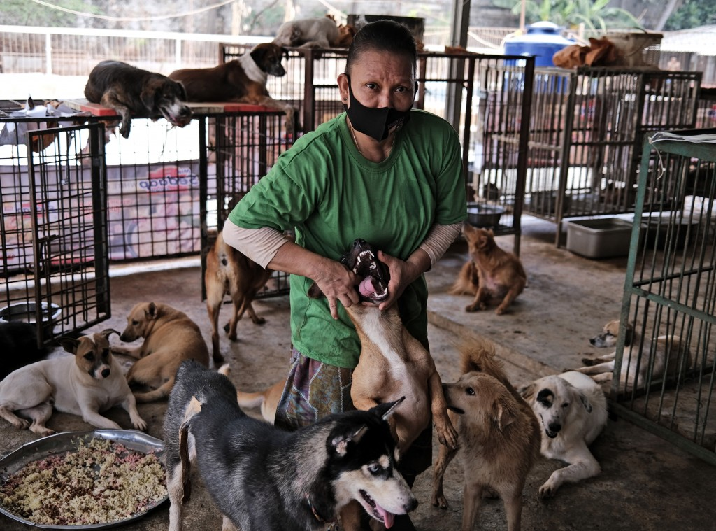A worker feeds medicine to a dog at Pejaten Shelter in Jakarta, Indonesia, Thursday, July 2, 2020. Located in 5,000 square meters of land in South Jak...