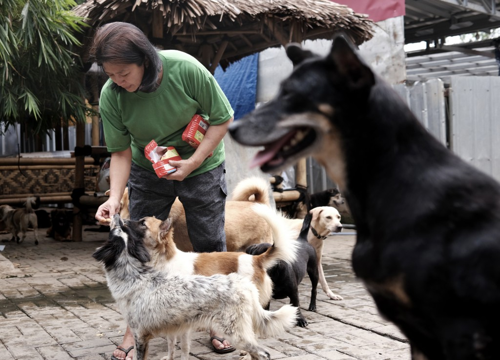 Susana Somali gives biscuits to dogs at Pejaten Shelter which she runs, in Jakarta, Indonesia, Thursday, July 2, 2020. The shelter is a place for more...