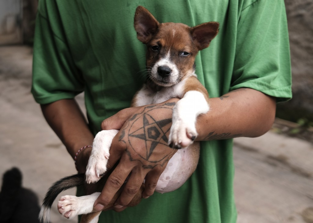 A worker holds a puppy at Pejaten Shelter in Jakarta, Indonesia, Thursday, July 2, 2020. Located in 5,000 square meters of land in South Jakarta, Peja...