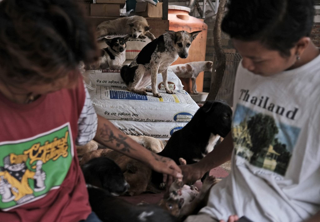 Workers play with a puppy at Pejaten Shelter in Jakarta, Indonesia, Thursday, July 2, 2020. Located on half a hectare (1.2 acres) of land in Indonesia...