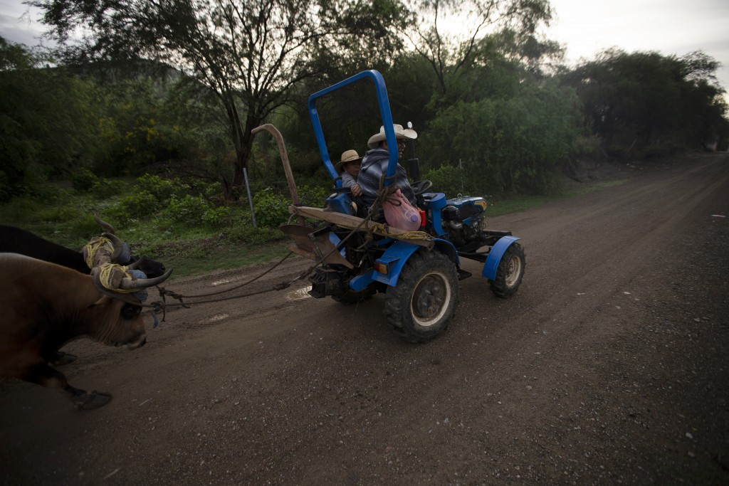 Felipe Martinez, who used to be a construction worker in the U.S., gives a neighbor a ride on his tractor as he drives to his farmland where he grows ...