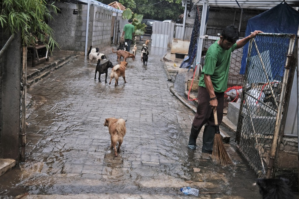 Workers clean up on a driveway inundated by water following a heavy rain at Pejaten Shelter in Jakarta, Indonesia, Thursday, July 2, 2020. The shelter...