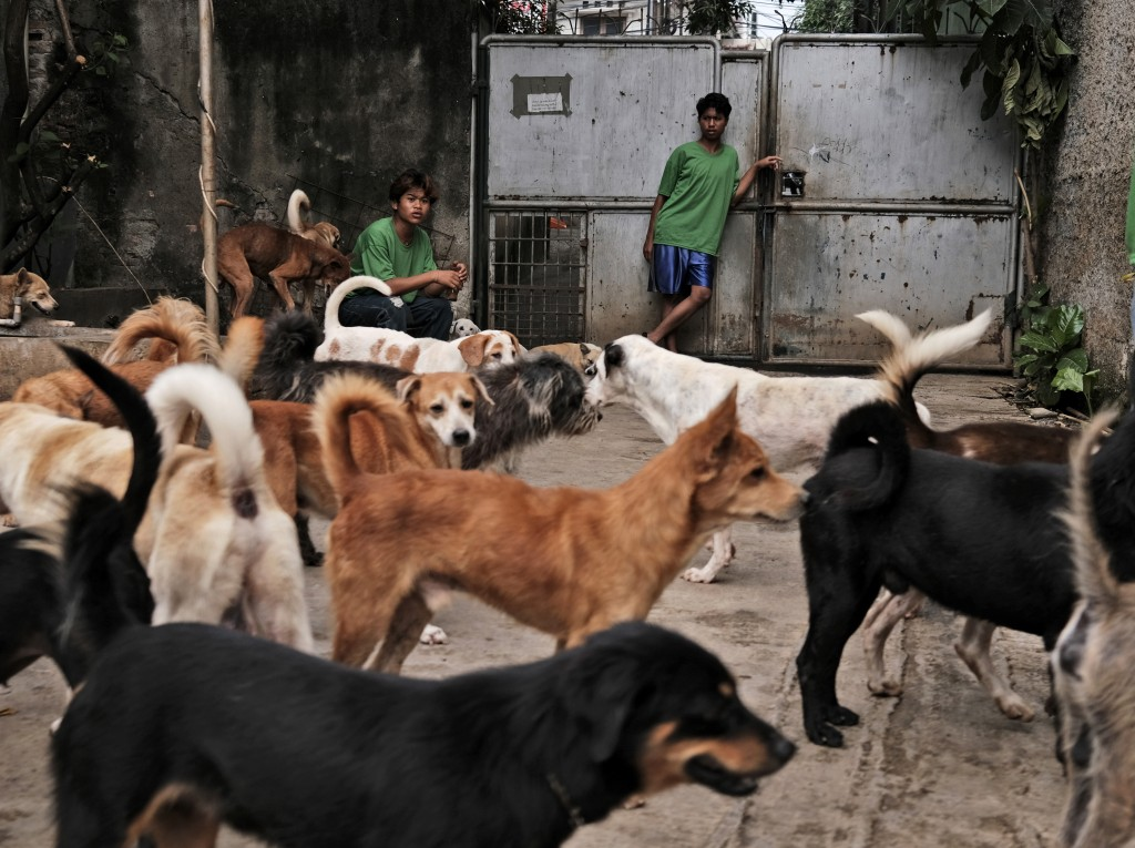 A worker stands at the gate of Pejaten Shelter, a home to more than 1,400 dogs, in Jakarta, Indonesia, Thursday, July 2, 2020. Many of the dogs are re...