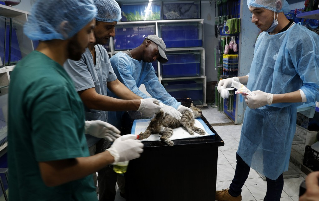 Palestinian veterinarians treat a cat at a clinic in Gaza City, Monday, July 13, 2020. In the impoverished Gaza Strip, where most people struggle to m...