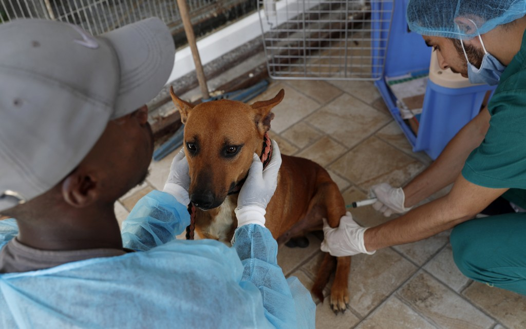 Palestinian veterinarian injects anesthetic for a neutering surgery at a clinic in Gaza City, Monday, July 13, 2020. In the impoverished Gaza Strip, w...