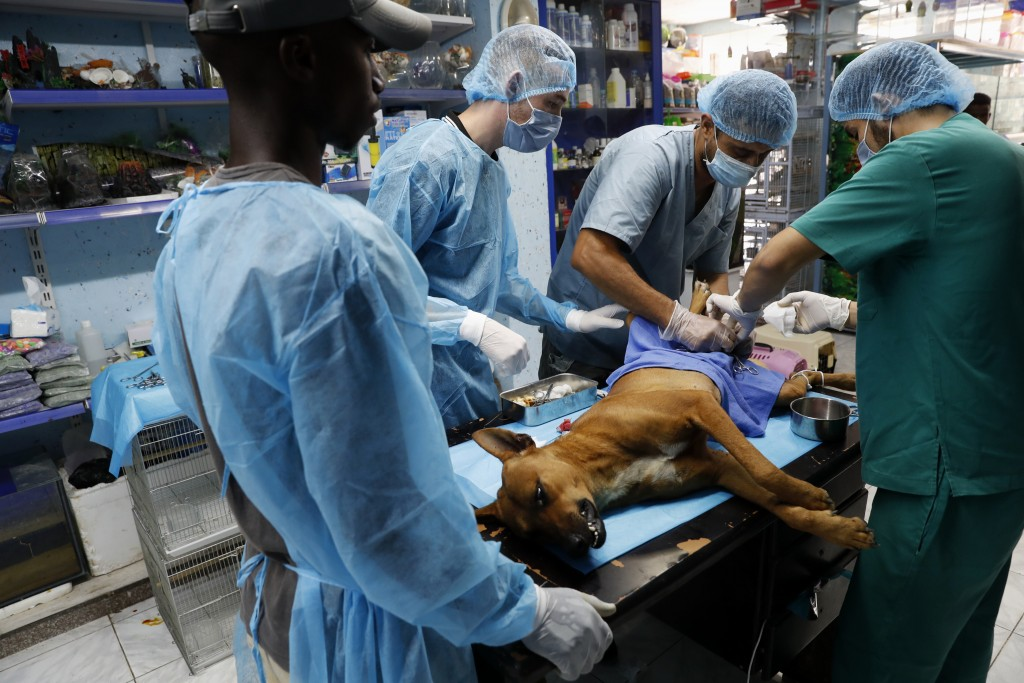 Palestinian veterinarians neuter a dog at a clinic in Gaza City, Monday, July 13, 2020. In the impoverished Gaza Strip, where most people struggle to ...