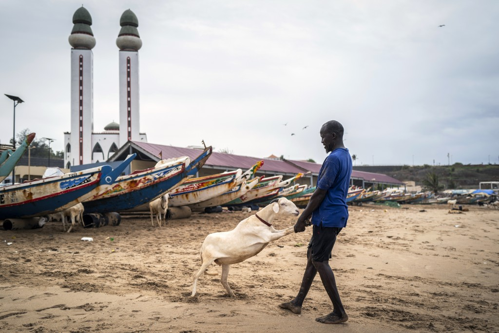 A man pulls his sheep to be washed with sand and seawater on the beach before it is offered for sale for the upcoming Islamic holiday of Eid al-Adha, ...