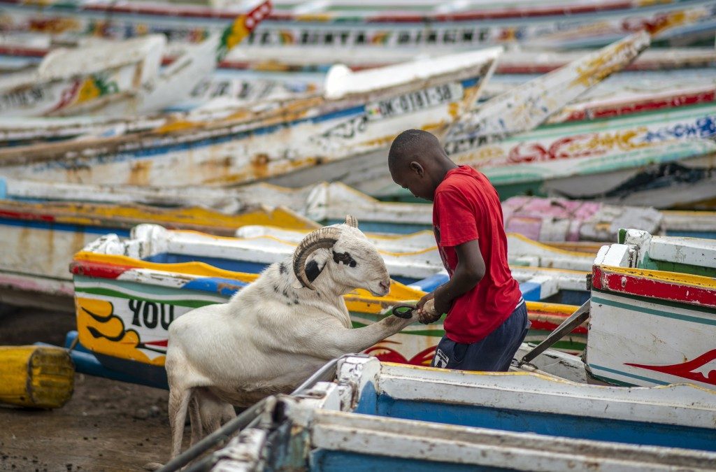 A child pulls a sheep past fishing boats to be washed with soap before it is offered for sale for the upcoming Islamic holiday of Eid al-Adha, on the ...