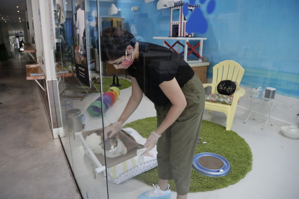 Aziah Sajerstein, who works as a volunteer at the Cat Cafe South Beach, wears a protective face mask and gloves as she sanitizes touch points during t...