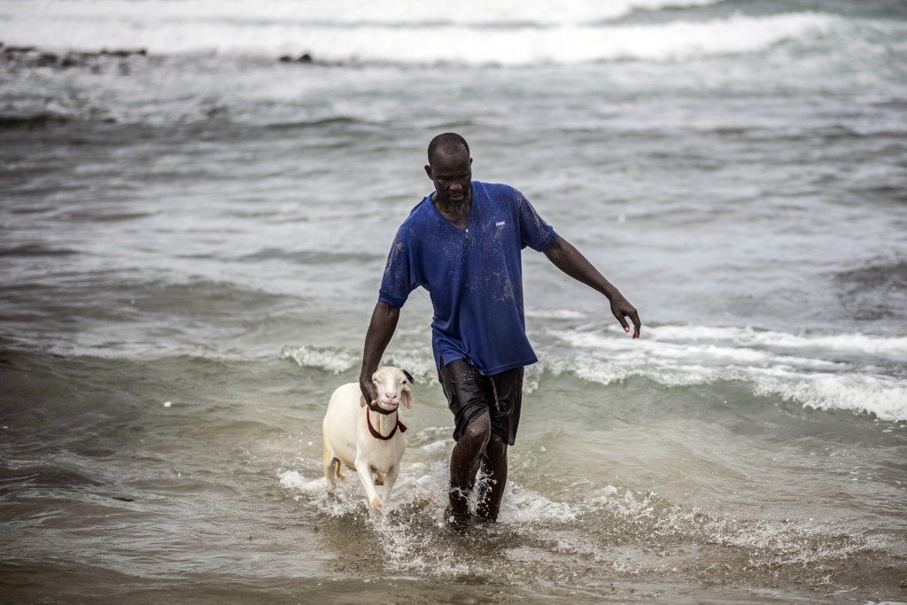 A man returns after washing a sheep with sand and seawater on the beach before it is offered for sale for the upcoming Islamic holiday of Eid al-Adha,...