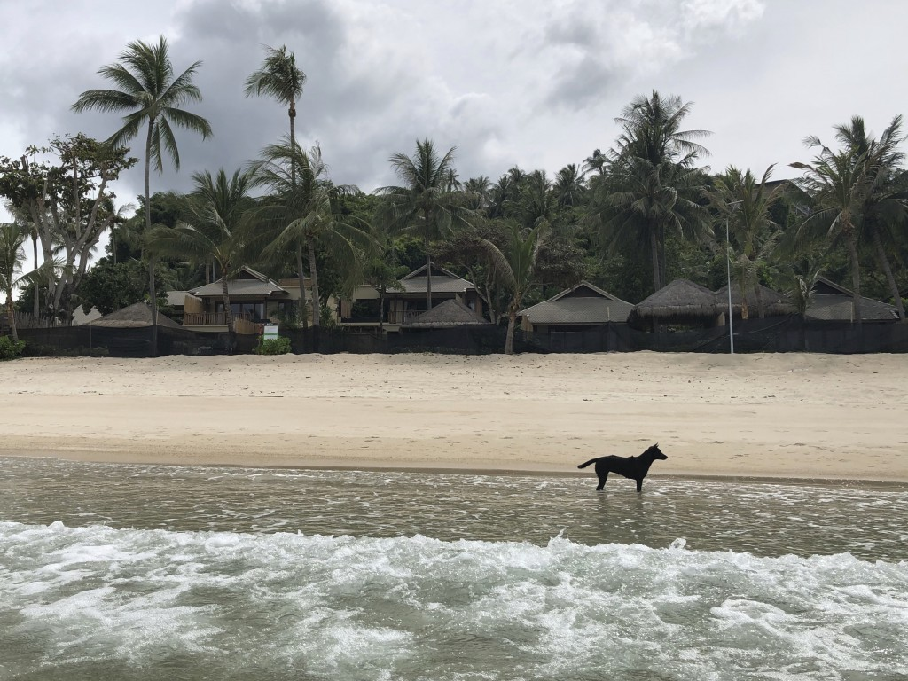 A stray dog stands in front of a shuttered luxury hotel on the popular tourist island of Koh Phangan, Thailand, on Thursday, July 2, 2020. While the h...
