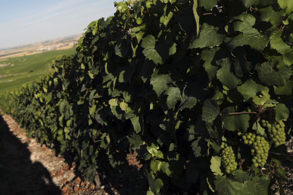 View of the Champagne vineyards in Avize, in the Champagne region, east of Paris, Tuesday, July 28, 2020. Producers in France's eastern Champagne regi...