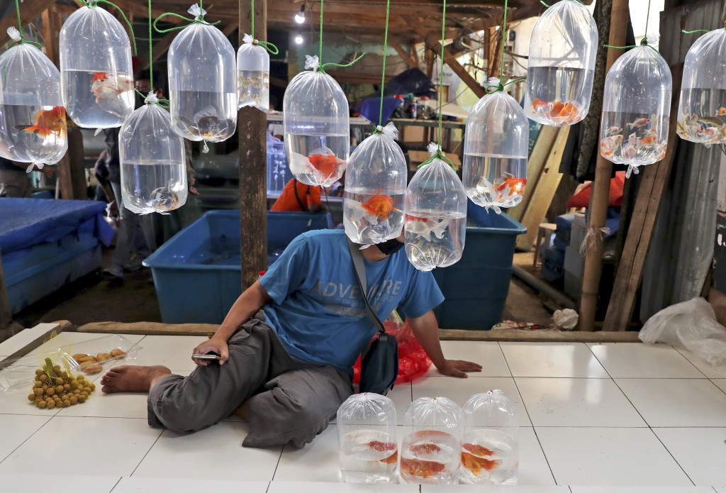 A vendor waits for customers under behind bags of aquarium fish for sale at a market on the outskirts of Jakarta, Indonesia, Monday, July 27, 2020. Th...