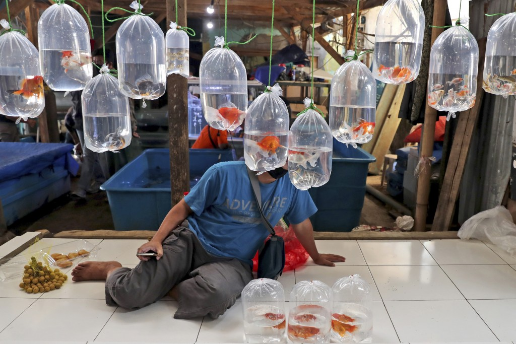 A vendor waits for customers behind bags of aquarium fish for sale at a market on the outskirts of Jakarta, Indonesia, Monday, July 27, 2020. The worl...